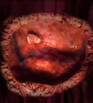 4 неделя беременности фото
