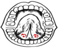 логопедический массаж фото