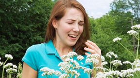 аллергия на пыльцу фото