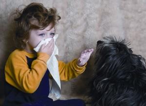 аллергия на шерсть фото