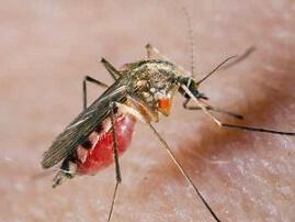 аллергия на комаров фото