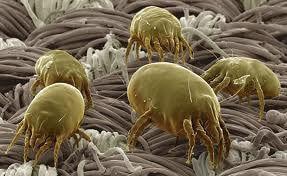 аллергия на пыль у ребенка фото