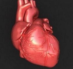 легочное сердце фото