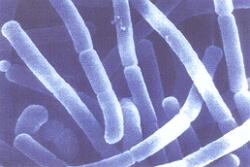 улучшение микрофлоры кишечника препараты фото