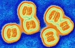 фото менингококковой инфекции